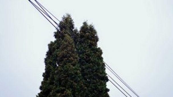 Odstránenie a okliesnenie stromov a porastov